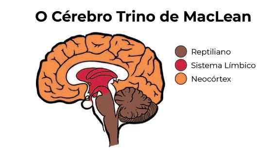 O Cérebro Trino